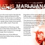 3 THE TRUTH ABOUT MARIJUANA